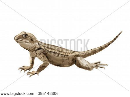Realistic Illustration With Roughtail Rock Agama. Hand Drawn Sketch Isolated On White Background.
