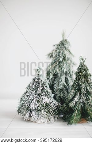 Christmas Scene, Miniature Winter Forest. Christmas Little Snowy Handmade Pine Trees On White Backgr