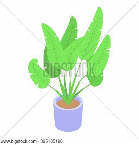 Floristic Tropical Plant Pot Icon. Isometric Of Floristic Tropical Plant Pot Vector Icon For Web Des