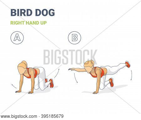 Female Doing Bird Dog Workout Exercise Guide Colorful Concept Illustration.
