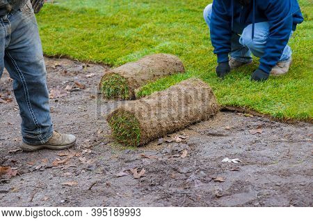 Hands In Gardening Laying Green Grass Sod Rolls Installing On The Lawn