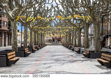 Catalonian Flags In Main Street Rambla With Shade Of Plane Trees At Town Of Tremp In The Spanish Pyr