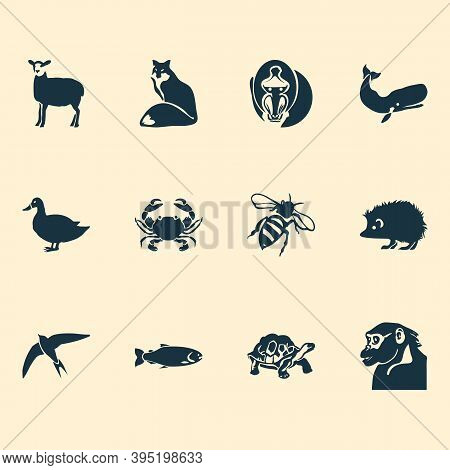 Zoo Icons Set With Swift, Turtle, Cachalote And Other Whale Elements. Isolated Vector Illustration Z