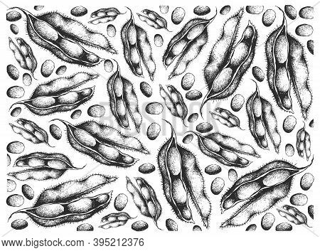Vegetable And Fruit, Illustration Wall-paper Of Hand Drawn Sketch Fresh Green Soybean Or Edamame Pod