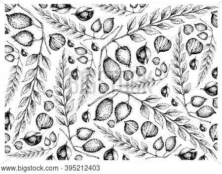 Illustration Wall-paper Of Hand Drawn Sketch Garbanzo Beans Or Chick Pea Background, A Good Source O