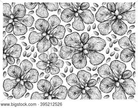 Illustration Wall-paper Of Hand Drawn Sketch Of Terminalia Catappa, Malabar Almond Or Sea Almond Fru
