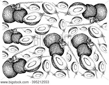 Tropical Fruits, Illustration Wall-paper Of Hand Drawn Sketch Coconut Or Ocos Nucifera Fruits Isolat