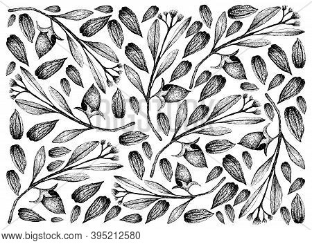 Illustration Wall-paper Of Hand Drawn Sketch Simmondsia Chinensis Or Jojoba Nuts And Seeds Backgroun