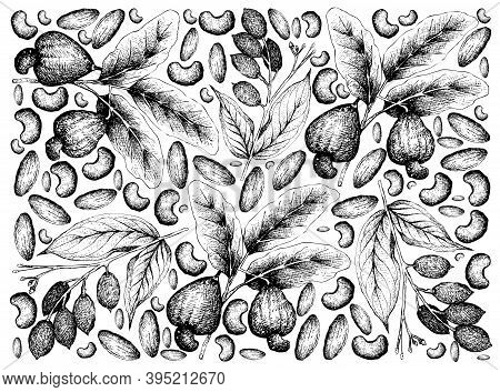 Illustration Wall-paper Of Hand Drawn Sketch Of Cashew And Canarium Indicum, Galip Nuts Or Pacific A