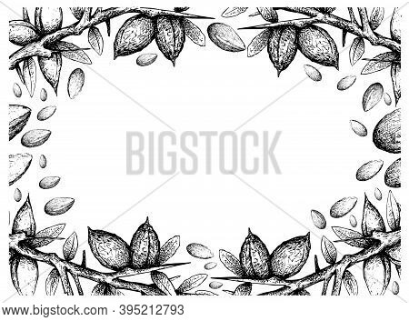 Illustration Frame Of Hand Drawn Sketch Of Argan Or Argania Spinosa Seeds On White Background, Used