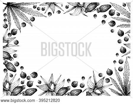 Illustration Frame Of Hand Drawn Sketch Of Borage Seeds With Hemp Leaves And Seeds On White Backgrou