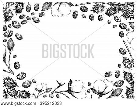 Illustration Frame Of Hand Drawn Sketch Of A Branch Of Cotton Flower With Bud And Castor Beans Or Ri