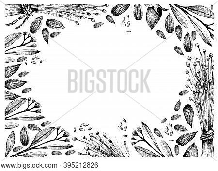 Illustration Frame Of Hand Drawn Sketch Flax Seed Or Linum Usitatissimum And Simmondsia Chinensis Or