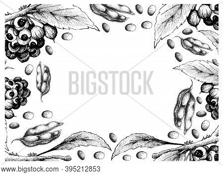 Vegetable, Illustration Frame Of Hand Drawn Sketch Red Guarana Or Paullinia Cupana Fruits And Soybea
