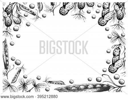 Illustration Frame Of Hand Drawn Sketch Fresh Peanuts Or Groundnut With Snow Peas, Snap Peas Or Pisu