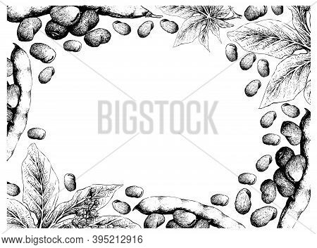 Illustration Frame Of Hand Drawn Sketch Fresh Fava Bean Or Broad Beans And Castor Beans Or Ricinus C