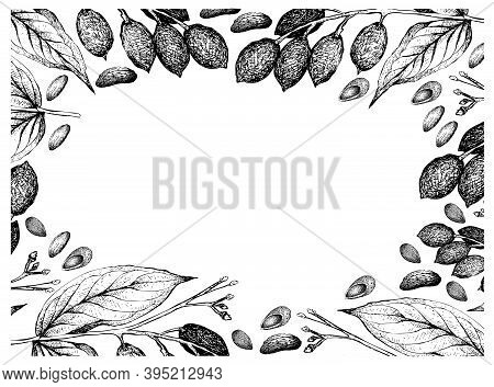 Illustration Frame Of Hand Drawn Sketch Of Almonds And Canarium Indicum, Galip Nuts Or Pacific Almon