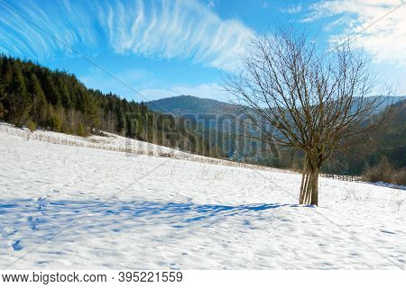 Tree On The Snow Covered Field In Mountains. Beautiful Nature Winter Landscape On A Sunny Day. Cloud