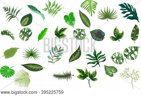 Set Of Tropical Leaves Of Various Plants Isolated On White Background