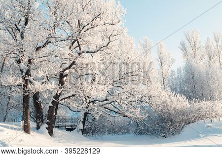 Winter Christmas landscape - frosty winter trees in the forest in sunny morning. Winter tranquil Christmas landscape of forest nature covered with snow, winter Christmas landscape scene
