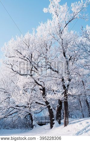Winter landscape, frosty winter trees in the winter forest in sunny winter weather. Winter landscape of forest winter nature covered with frost and snow, winter forest trees, winter forest landscape