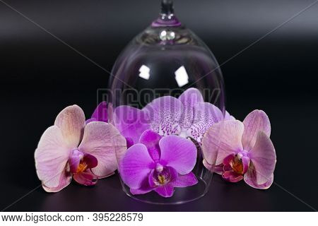 A Group Of Lilac Orchid Flowers Of Various Shades Around An Empty Overturned Wine Glass.