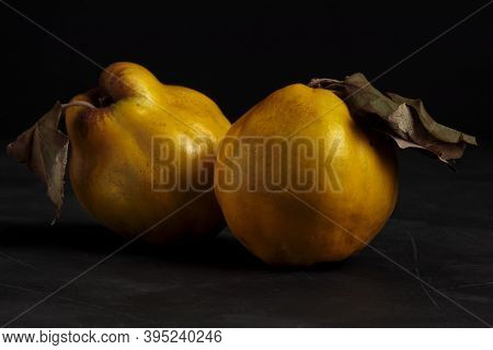 Quince Fruit Still Life. Yellow Apple Fruit Isolated. Fresh And Juicy Autumn Season Apple-quince, Go
