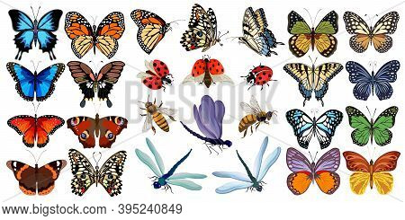 Collection Of Multicolored Insects.butterflies, Ladybugs, Bees And Dragonflies In Color Set.