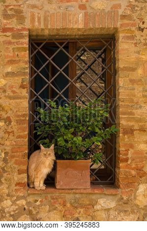 A ginger cat sitting on the window ledge of an old house in the historic village of Murlo, Siena Province, Tuscany, Italy