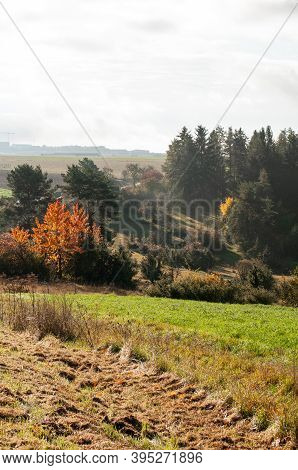Hilly Autumn Landscape In Swabian Alb With A Wild Cherry Tree With Colorful Leaves