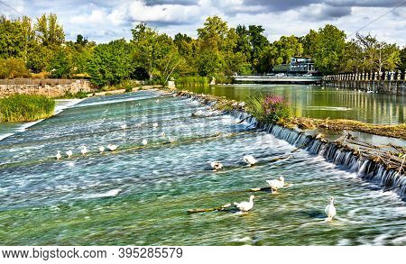 Ducks On The Tagus River At The Royal Palace Of Aranjuez, Spain