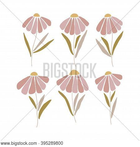 Chamomile Silhouette Clipart Set. Marguerite Flat Vector Illustration Isolated White Background. Con