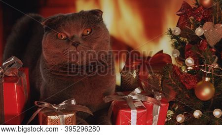 Portrait Of Gray Fluffy Cat In Trendy Christmas New Year Style. New Years Christmas Festive Backgrou