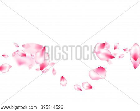 Pink Cherry Blossom Petals Isolated Windy Blowing Background. Cosmetics Composition. Pastel Pink Blo