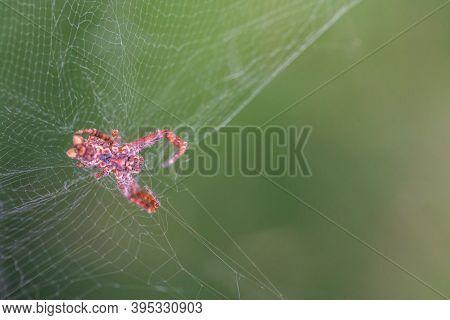 Spider And Spiderweb With Blurred Greenish Background