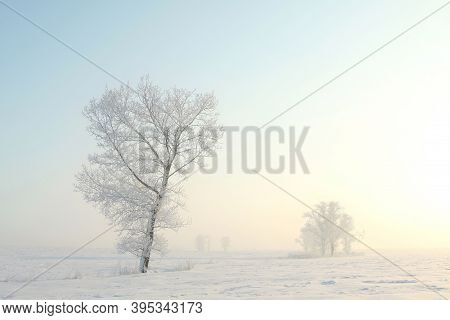 Winter tree sunrise Nature sun landscape Nature landscape Nature background landscape snow landscape Nature background landscape Nature landscape Nature background Nature landscape Nature landscape sunset Nature background landscape Nature background.