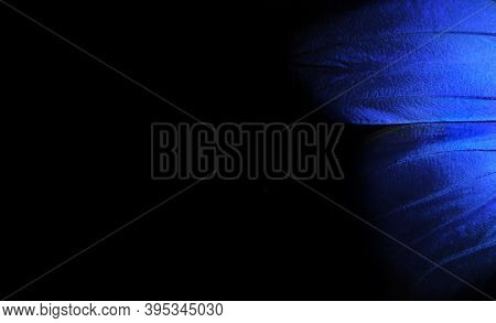 Wings Of A Butterfly Morpho Texture Background. Blue Morpho Butterfly. Blue And Black Background  Co