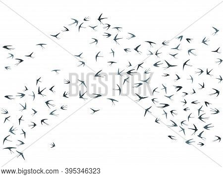 Flying Swallow Birds Silhouettes Vector Illustration. Migratory Martlets Bevy Isolated On White. Fea