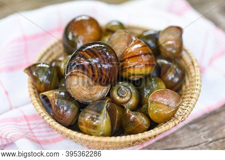 Apple Snail Freshwater Snail River From Nature Field For Food Cooked Thai Local Food, Pila Ampullace