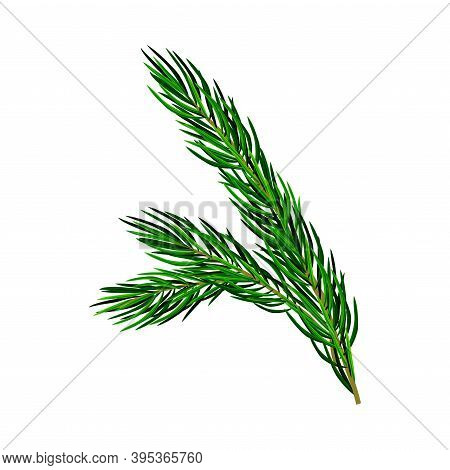 Green Pine Tree Evergreen Branch With Needle Leaves Vector Illustration