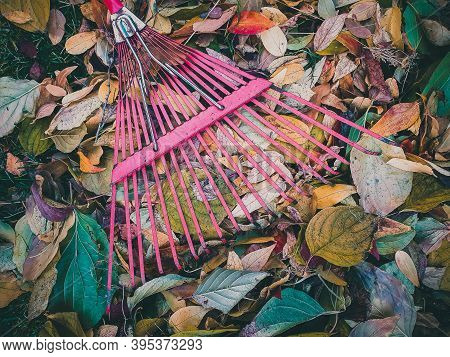Close Up Of Metal Fan Rake Lie On Pile Of Colorful Dry Leaves
