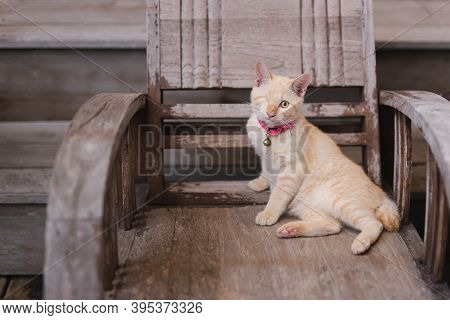 Injured Cat With One Eye Funny Sitting On Wooden Chair.