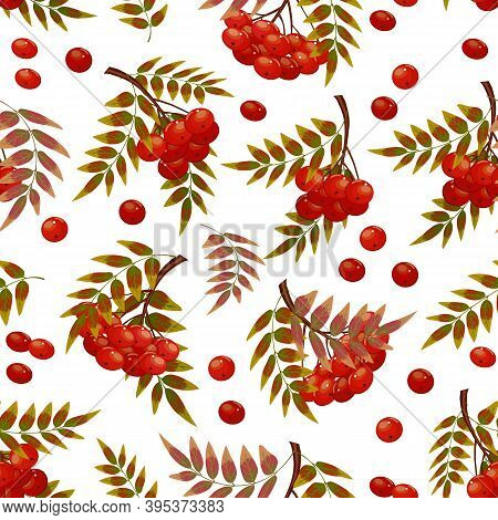 Pattern From Red Berries And Leaves.red Berries And Autumn Leaves In A Colored Pattern On A White Ba