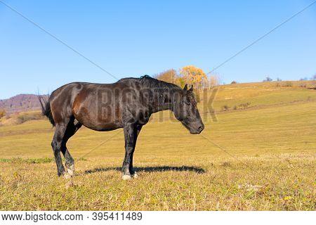 Horse Walks On The Plain.horse Walks On The Plain