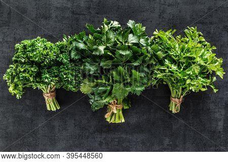 Cilantro On A Black Background. Fresh Cilantro In A Bunch. Fresh Cilantro Herb Leaves Close-up. Heal