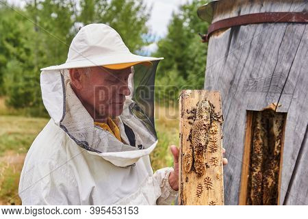Perm, Russia - August 13, 2020: Beekeeper Checks A Bee Colony In A Traditional Hive Inside A Log