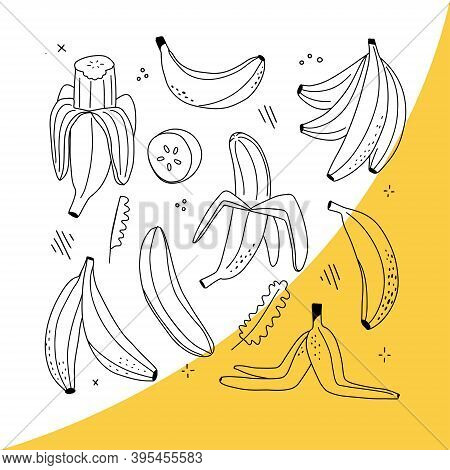 Vector Set Of Line-art Bananas. Overripe Banana, Single Banana , Peeled Banana, Bunch Of Bananas. Ha