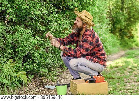 Gardener Planting Flower With Garden Trowel. Farmer Planting Seedling. Hobby Concept. Earth Day. Lov