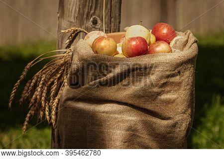 Burlap Sackof Ripe Apples In The Courtyard