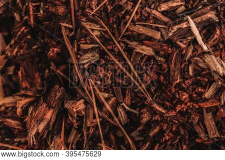 Forest Background Of Small Brown Rotten Wood Pieces And Pine Needles Covering The Ground.
